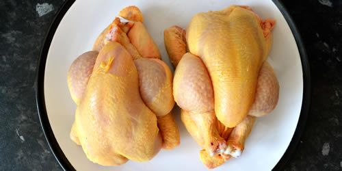 chickens-poussins-image.jpg