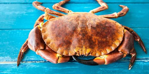 crab-image.jpg