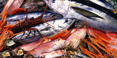fish-image.png