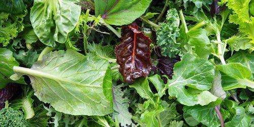 salad-leaves-image.jpg